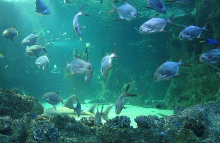 Ocean LIFE Sydney Aquarium