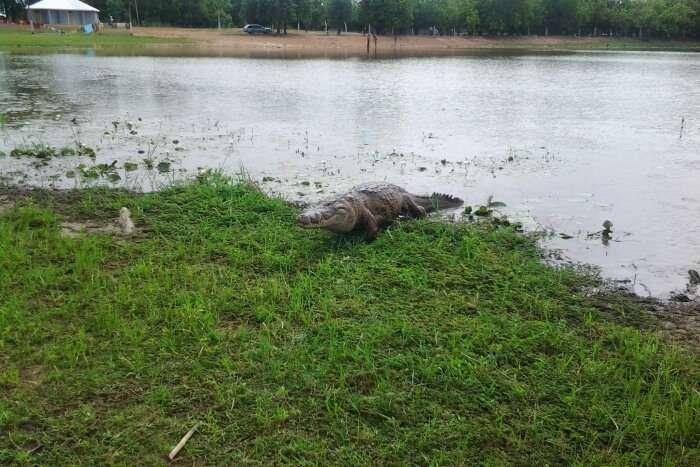 Paga Crocodile Park