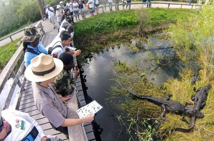 Park-Everglades