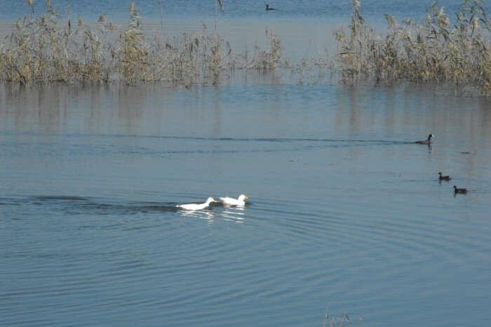 Rishon Lezion Lake