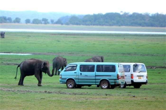 Safari in Minneriya