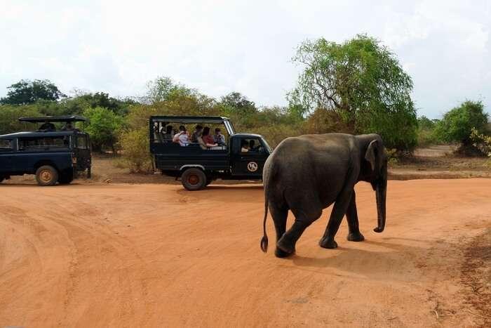 Elephant and jeep
