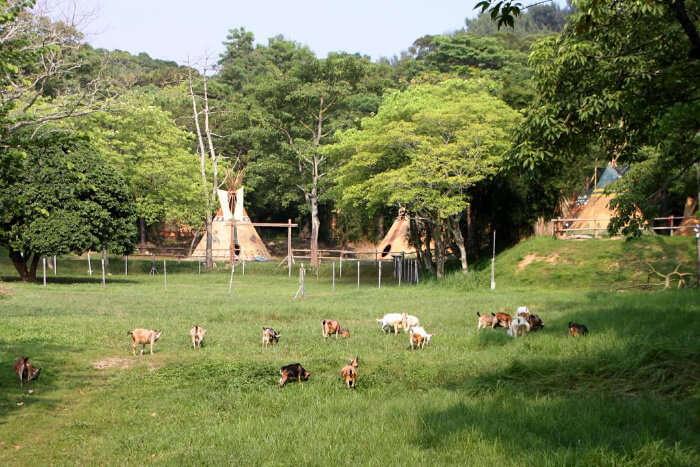 Sai Yuen Farm