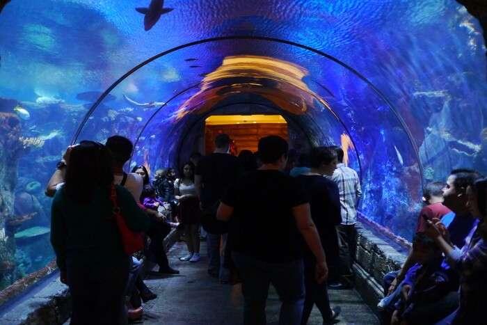Shark in the aquarium