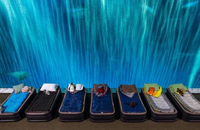 Sleepover at the Aquarium