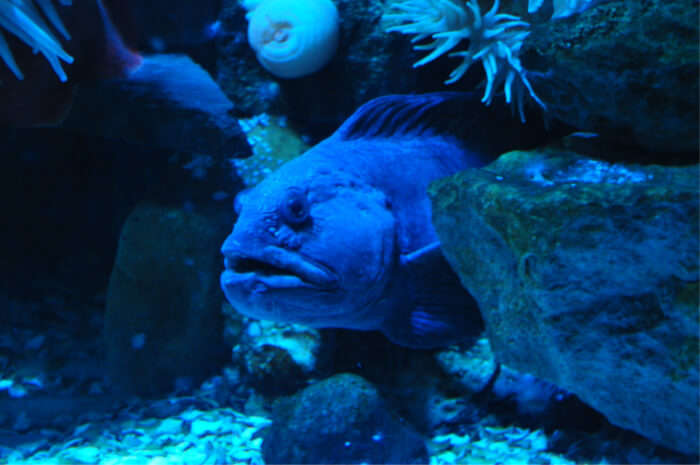Take a trip to the Sea Life Center