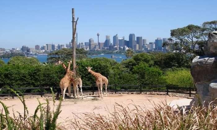 famous zoo in Sydney