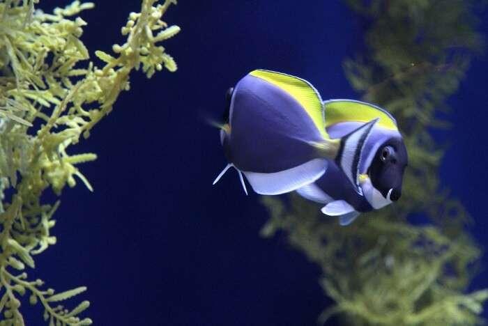 The Adventure Aquarium