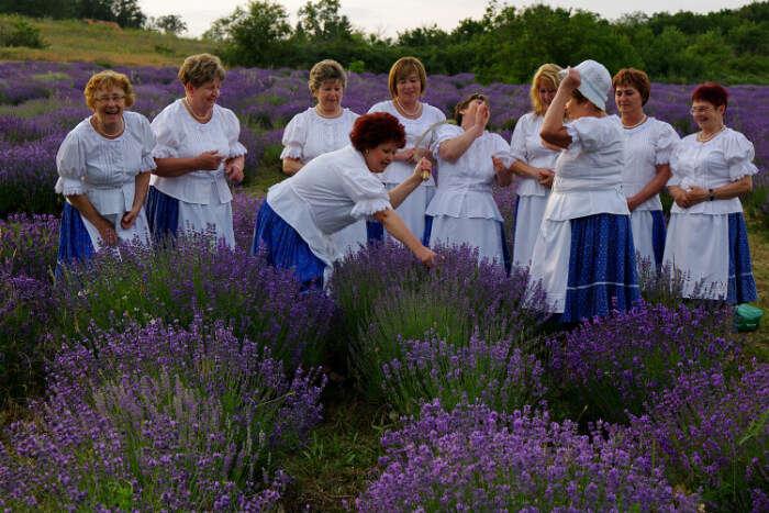 Tihany Lavender Festival
