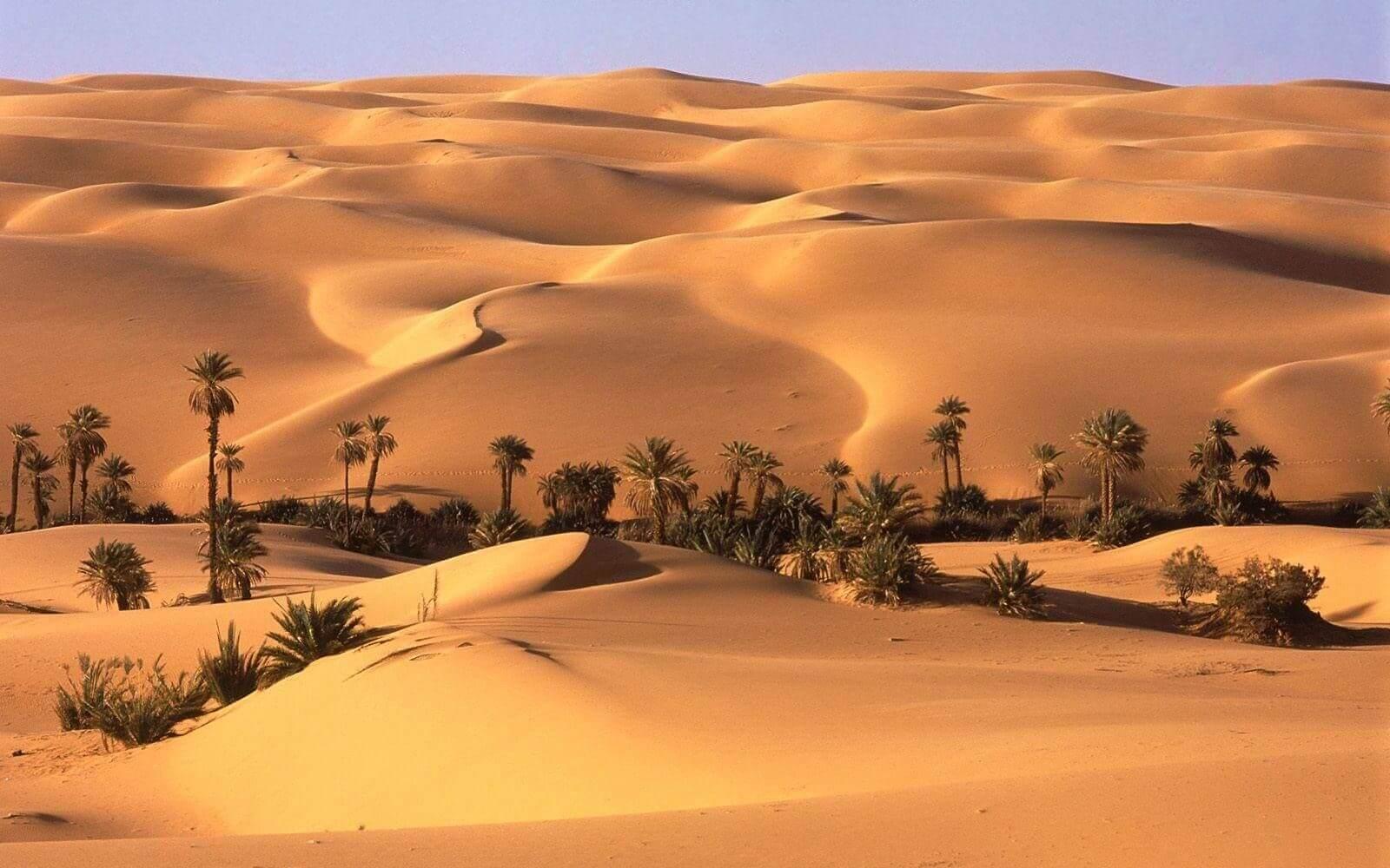 The desert of Egypt