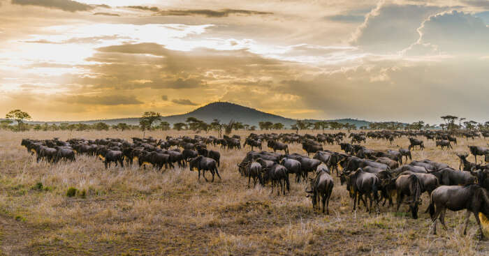 Best National Parks In Tanzania