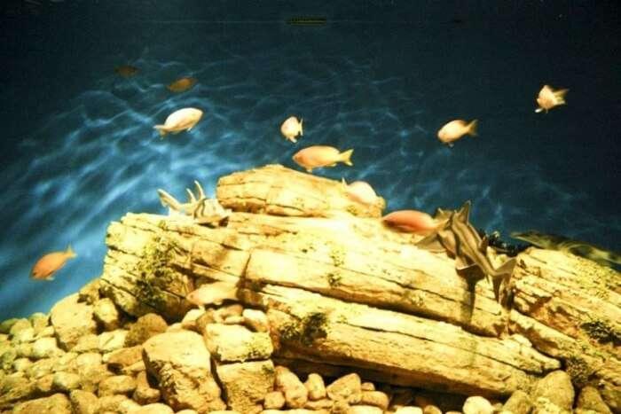 Eden Aquarium, Seychelles