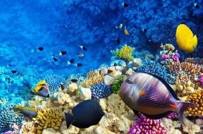 tanzania scuba diving cover
