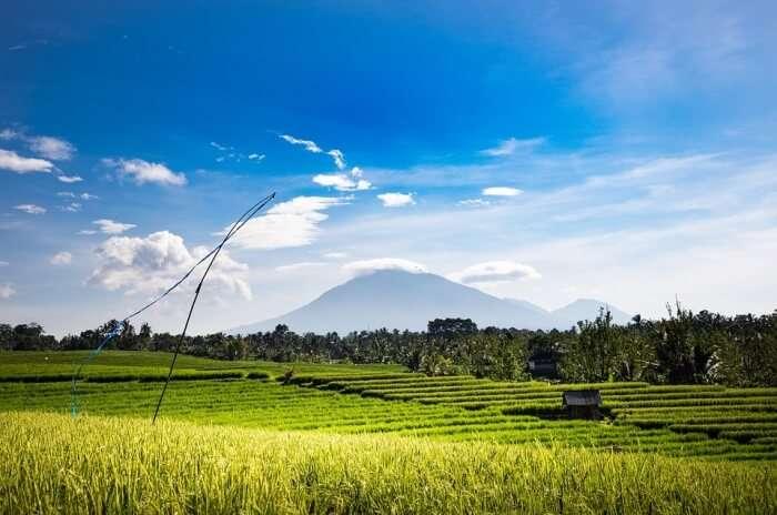 100 Rice Fields Sacred Meditation Area
