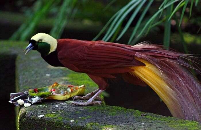 About Bali Bird Park