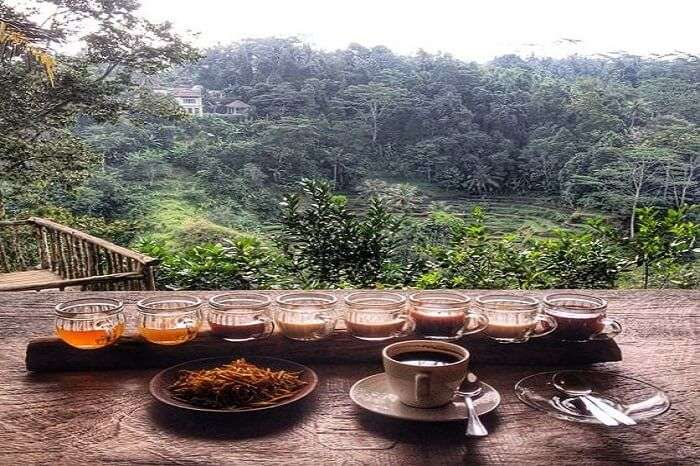 About Coffee Plantation At Bali Pulina Agro Tourism