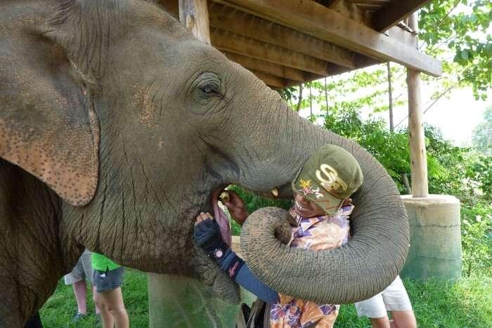 About Elephant Nature Park
