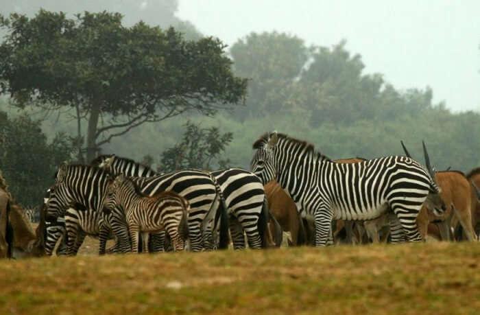 About Ramat Gan Safari Park
