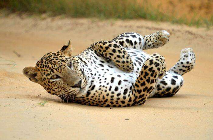 About Udawalawe National Park