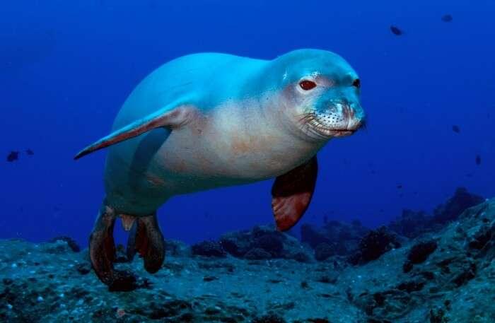 Seal under water