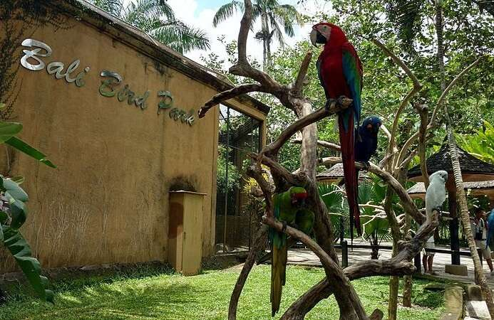 Bali Bird Park Activities