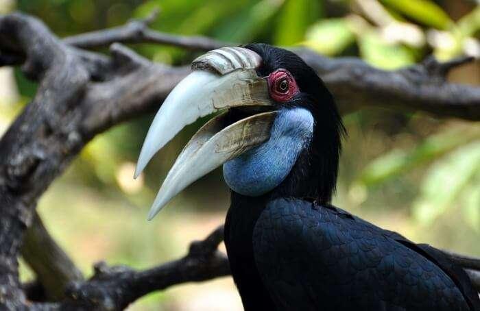 Bali Bird Park Facilities