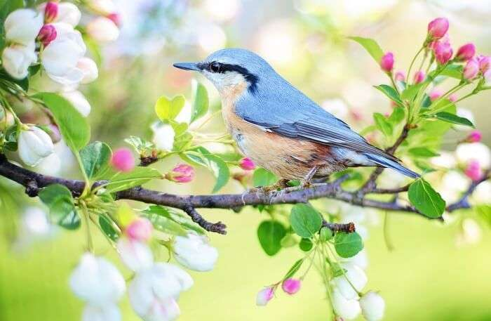 Beautiful Bird view