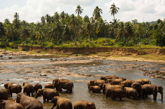 Best Time To Visit Udawalawe National Park
