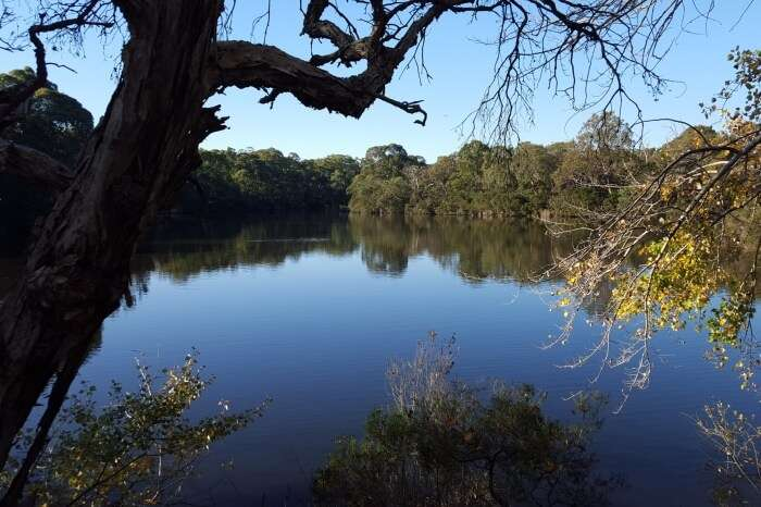 Blackburn Lake Sanctuary