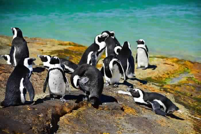 Beach side penguins