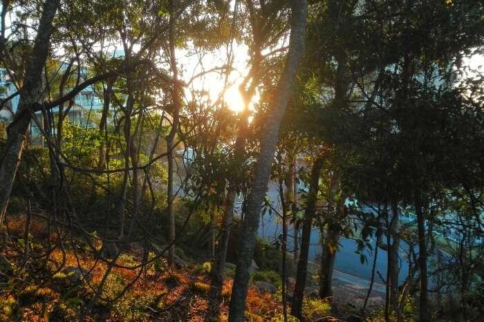 Burleigh Head National Park