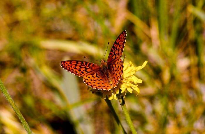 Beautiful Butterfly View