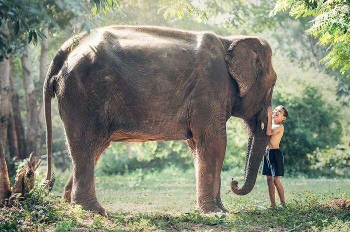 Cambodian Wildlife Sanctuary