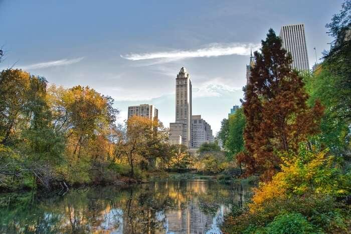 Central Park foliage photo