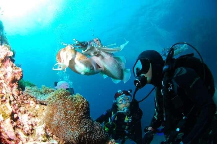 Scuba Diving Sea Underwater