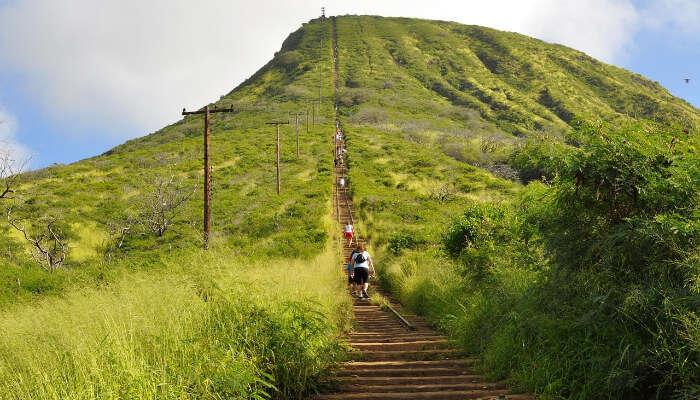 Coco-Trail-Guide