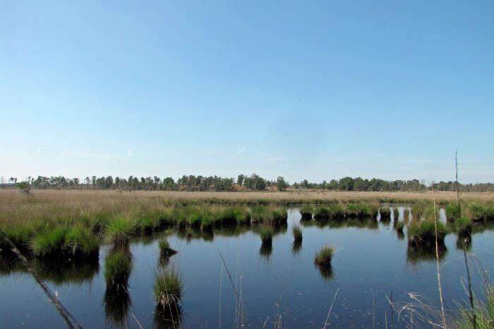 De Zoom– Kalmthoutse Heide