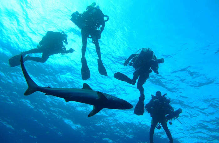Diving Lessons under water