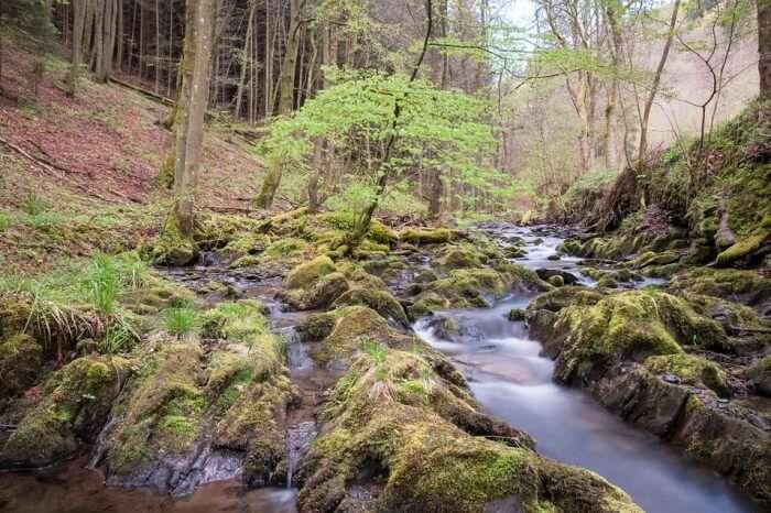 Eifel Nature Park