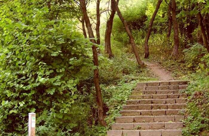 Eifelsteig Trail