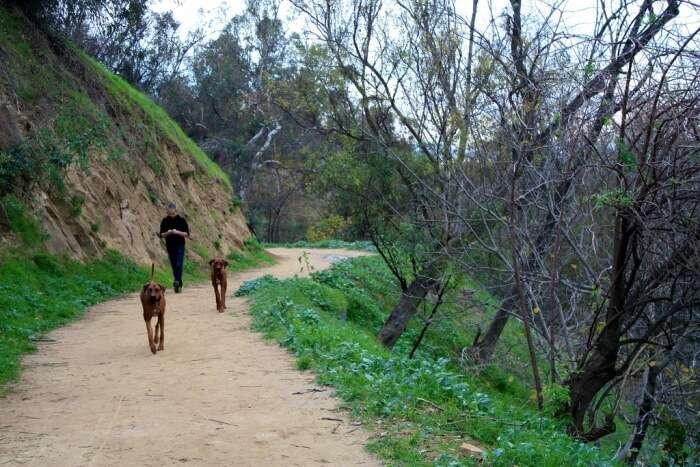 Elysian Park Hiking Trail