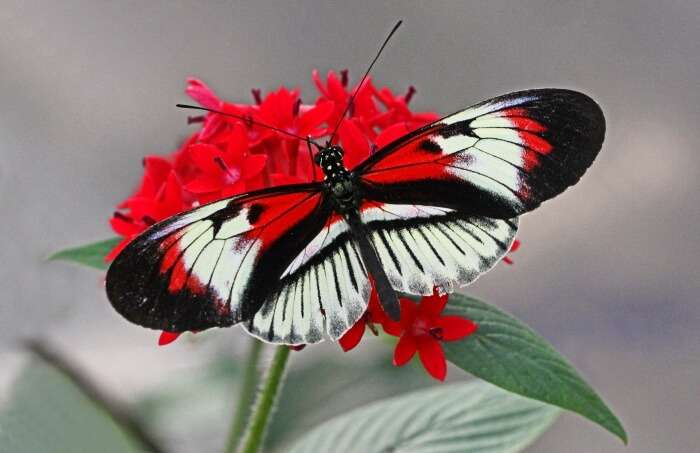 Explore the Butterfly World