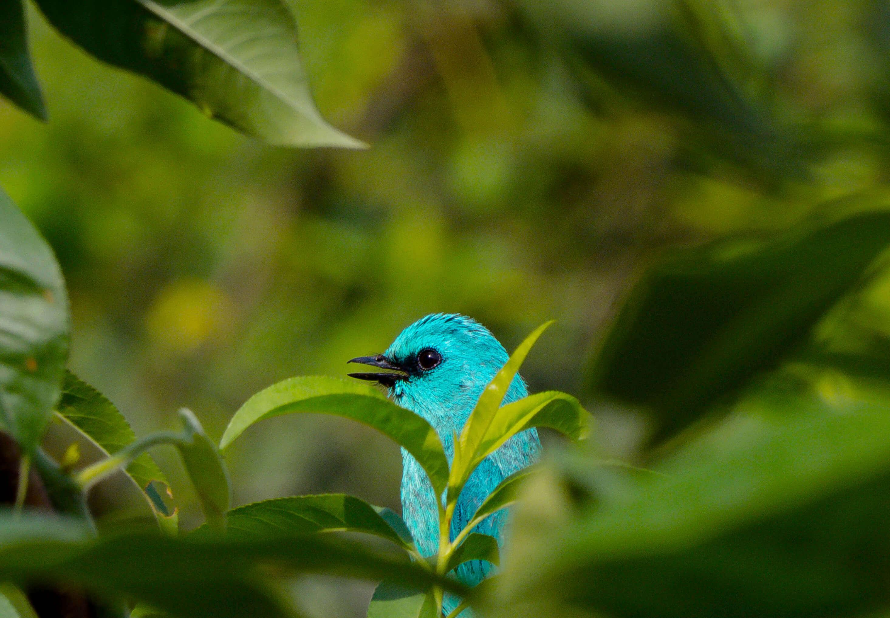 a blue bird in a jungle
