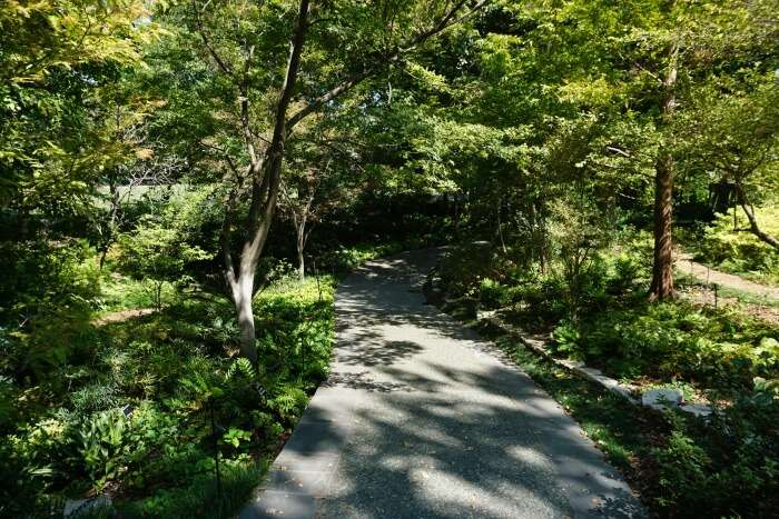 Ferndell Trail