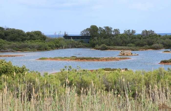Għadira Nature Reserve In Malta