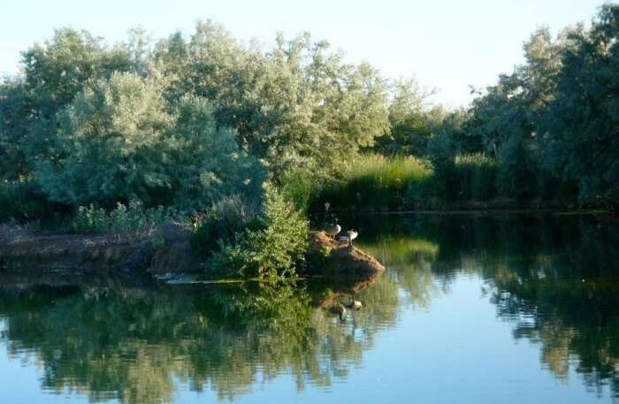 Green Island Pond