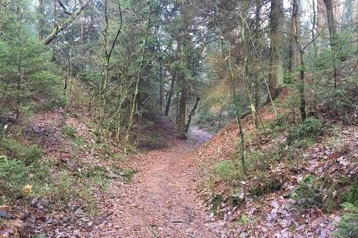 Heidschnuckenweg Trail