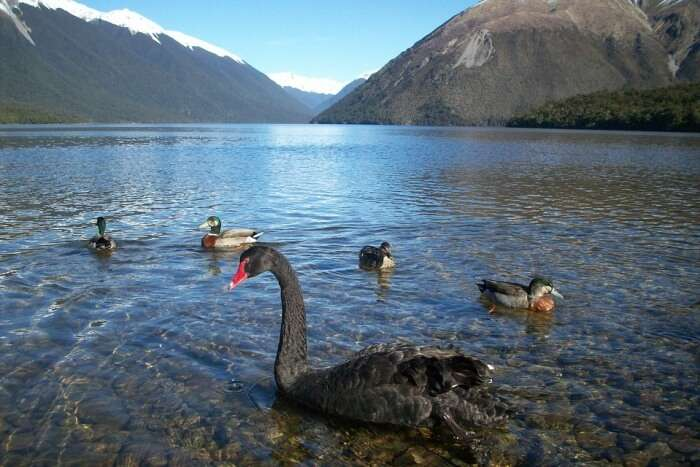 How to reach Nelson Lakes National Parks