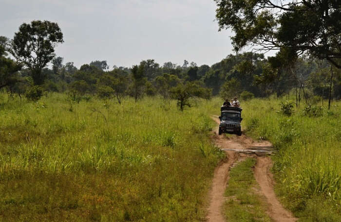 Jeep Safari View