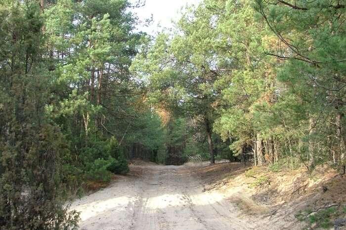 Kampinos National Park
